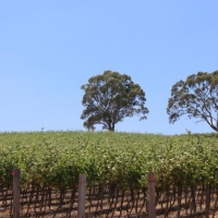 Well established vineyard that offers commanding views over the valley