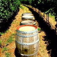 WINE BARRELS, EX FORTIFIED HOGS