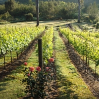 IPSWICH: HOBBY VINEYARD & LARGE 4 BEDROOM HOUSE + SEPARATE GUEST/HOME OFFICE AMID TROPICAL GARDENS