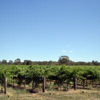 Mustering Paddock Vineyard for sale
