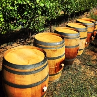 Vintage Wine Barrels with Silicone bung